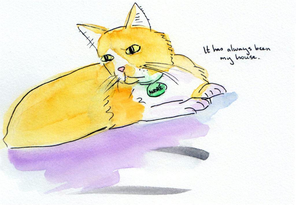 cat_house2